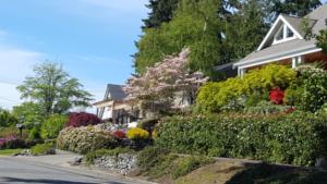 Neighborhood Streetscape