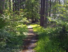 Trail at Masko Park