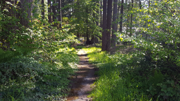 Trail at Masko Park